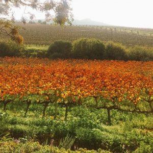 jordan wine estate winter sonia cabano blog eatdrinkcapetown