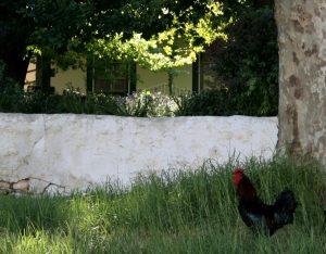 farm bartholomeus klip sonia cabano blog eatdrinkcapetown