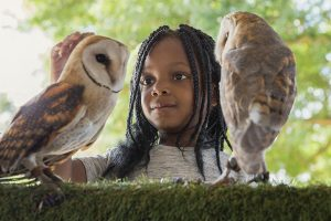 spier eagle encounters easter 2019 sonia cabano blog eatdrinkcapetown