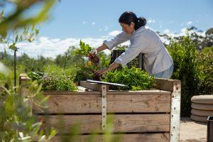 nicole precoudis harvesting organic vegetables terra madre elgin valley sonia cabano blog eatdrinkcapetown