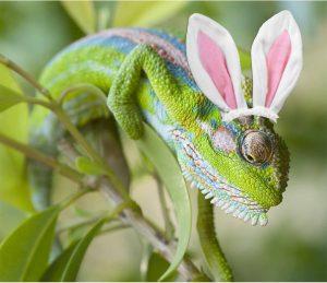 ornamental chameleon jordan easter 2019 sonia cabano blog eatdrinkcapetown