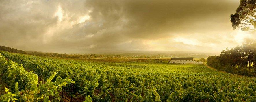 vineyards steenberg sonia cabano blog eatdrinkcapetown
