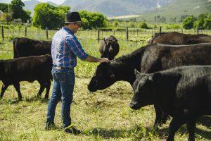 jg cattle avondale sonia cabano blog eatdrinkcapetown
