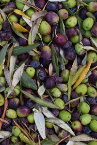 tokara olives sonia cabano blog eatdrinkcapetown