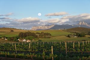 middelvlei wine farm views sonia cabano blog eatdrinkcapetown