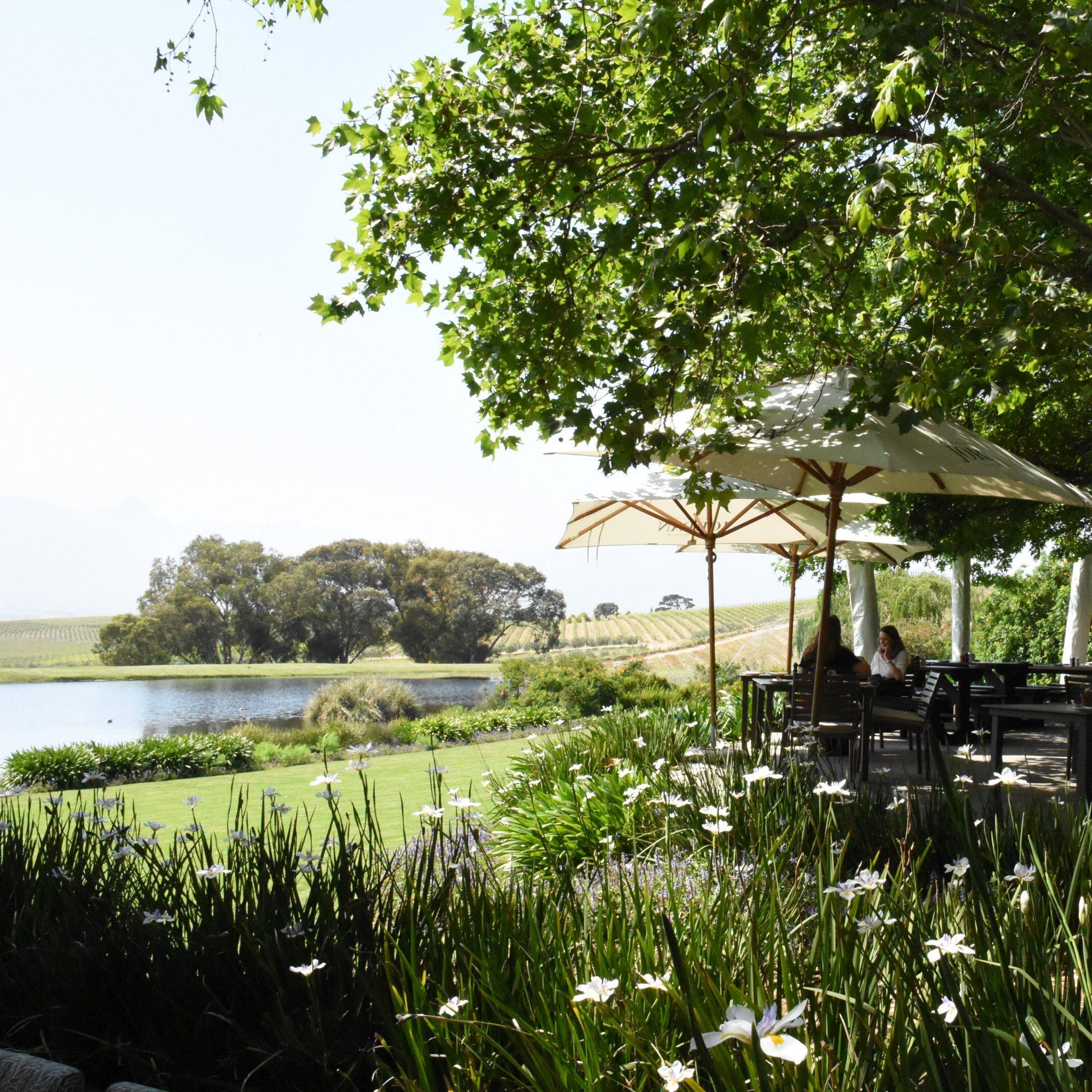 Views of the tranquil lake, Jordan Estate, Sonia Cabano blog eatdrinkcapetown