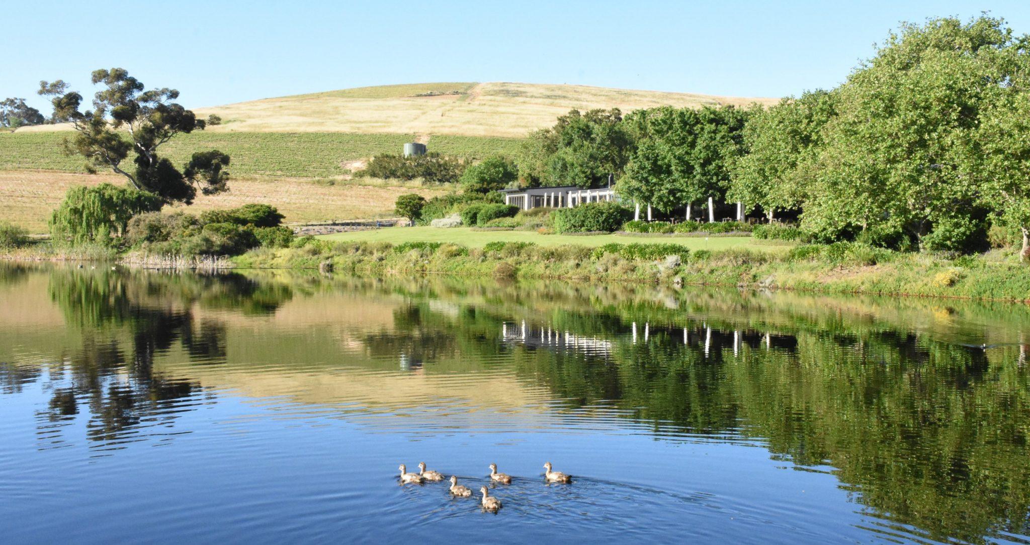 Tranquility, lake and views, Jordan Estate, Sonia Cabano blog eatdrinkcapetown