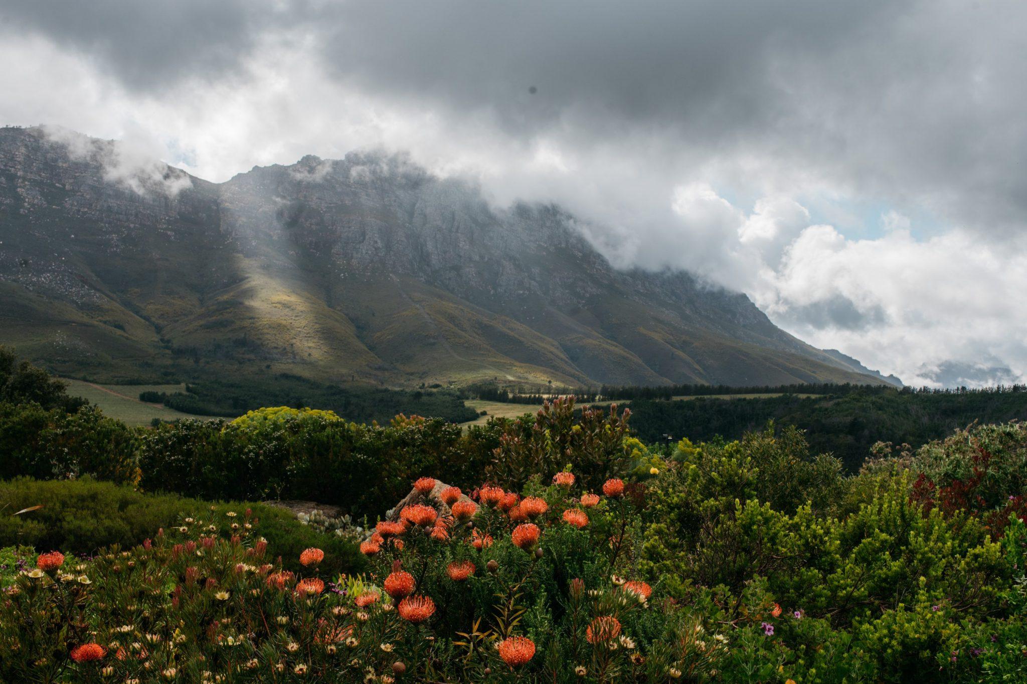 Beautiful Stellenbosch Sonia Cabano blog eatdrinkcapetown
